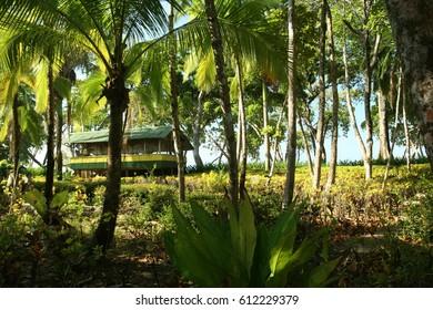 Palm garden near a surfer beach in Costa Rica