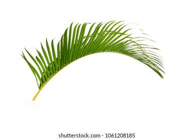 Palm green of leaves isolated on white background.