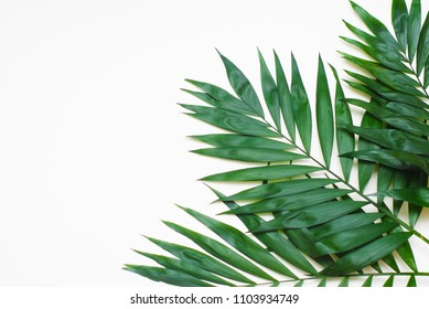Palm Green Leaves Tropical Exotic Tree Isoalted on White Background. Holliday Patern Template