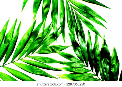 Palm Green Leaves Tropical Exotic Background. Holliday Patern. toned.