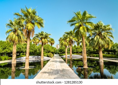 Palm Grove in Al Shaheed Park, Kuwait City. Kuwait, a Persian Gulf Country