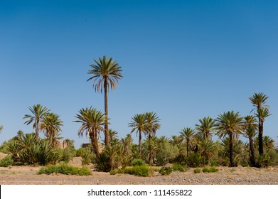 The palm grove near Skoura, Morocco