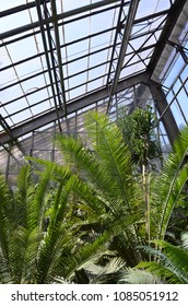 Palm House with tropical plans