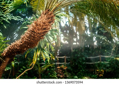 Palm with jungle in the bakcground and copy space