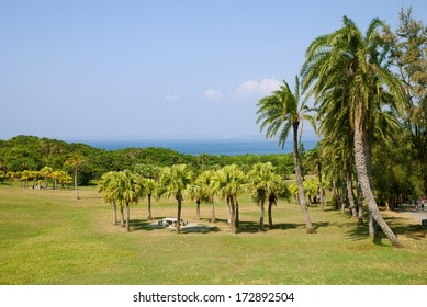 Palm landscape in Kenting National Park, Taiwan
