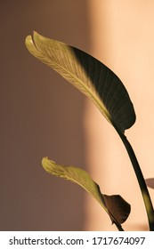 Palm leaf beautiful shadows on the wall. Creative, minimal, styled concept for bloggers.