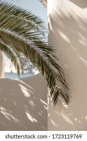 Palm leaf beautiful shadows on the wall. Creative, minimal, bright and airy styled concept.