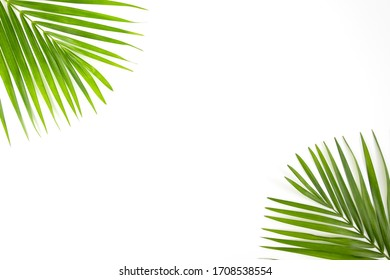 Palm leaf branches on white background.Top view.
