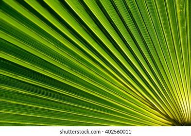 Palm leaf close-up. Natural background.