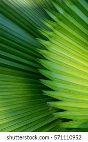 Palm leaf detail from the rain forest