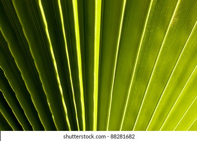 palm leaf in green