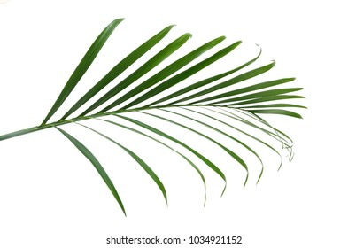 A palm leaf isolate