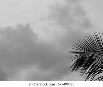 palm leaf isolated in black and white for background pattern.