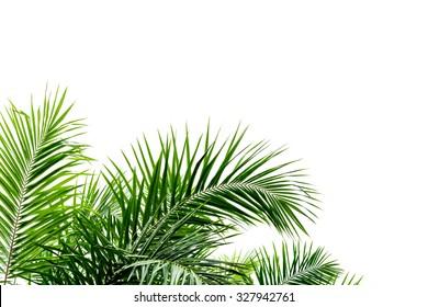 Palmenblatt einzeln auf weißem Hintergrund