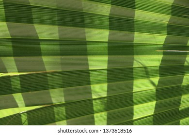palm leaf, palm leaves texture in nature layer for background, natural background texture, basket weave looking