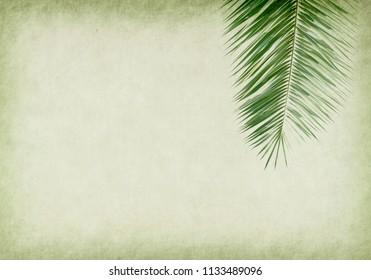 palm leaf old grunge antique paper texture