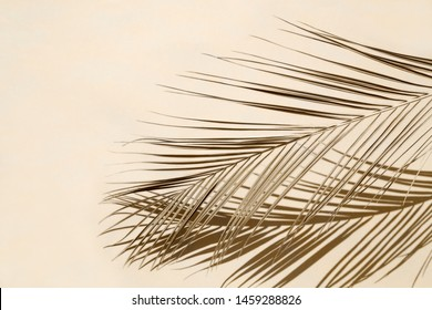 Palm leaf on beige pastel background