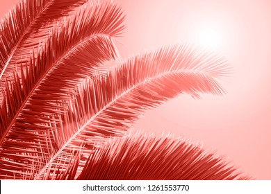 Palm leaf on bright background. Living Coral Color of the year 2019.