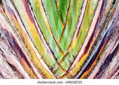palm leaf ovary