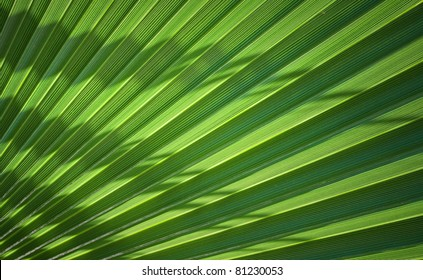 Palm Leaf section with nice curved shadows