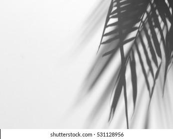 palm leaf shadow on white canvas