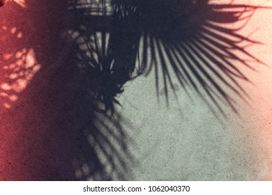 Palm leaf shadows