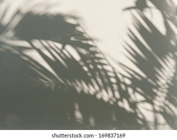 Palm leaf shadows on a white wall
