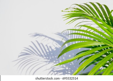 palm leaf and shadows on a white wall