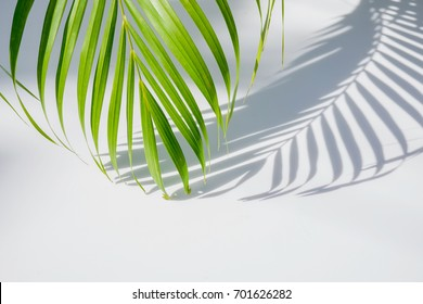 palm leaf and shadows on a white background