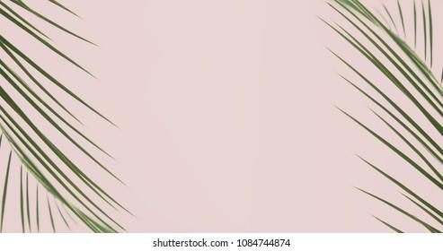 Palm leaf. Stylized photo in vanilla tone.