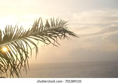 palm leaf at sunset