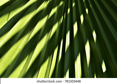 Palm leaf texture and pattern of shadows, abstract background.