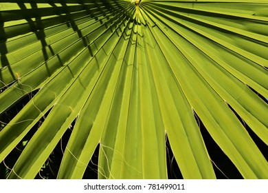 Palm leaf under bright summer sun, leaf texture, holiday background.