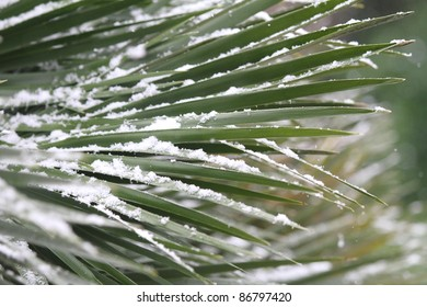 Palm leaf under snow