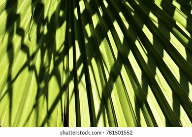 Palm leaf under sunlight, pattern of light and shadow, abstract background.