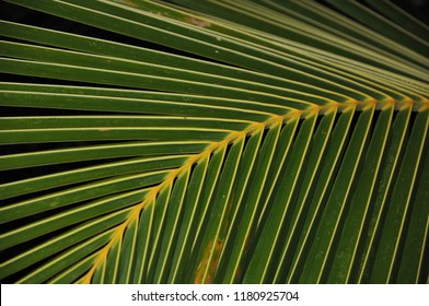 Palm leafs with black background