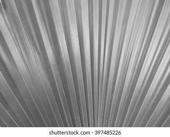 Palm leafs texture with black and white style