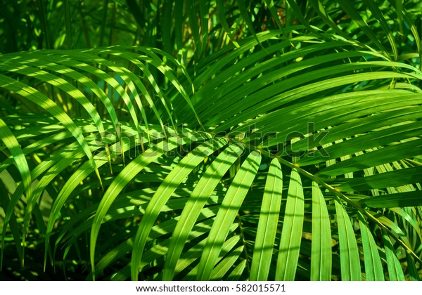 palm leave green