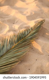 Palm leave on the soft beautiful sandy beach. Background. Sunset.