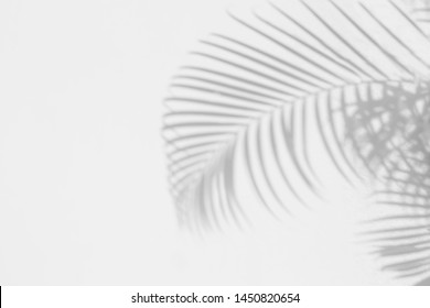 Palm leaves Abstract gray shadow background on white concrete wall texture, black and white, monochrome