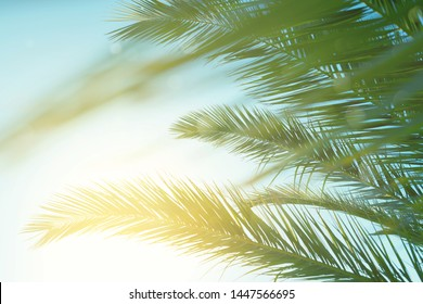 Palm leaves against blue sky at windy weather. Sea breeze, summer vacation.