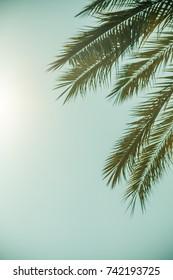 Palm leaves against blue sky on a tropical coast
