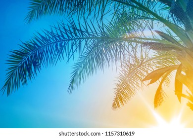 Palm leaves against the sunset. Summer tropical background.
