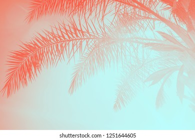 Palm leaves against the sunset. Summer tropical background toned in trendy colors of the year 2019. Living Coral and Limpet Shell.