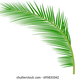 Palm leaves background. exotic palm leaves. Raster version