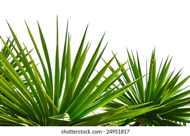 palm leaves border isolated on white background