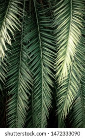 Palm leaves and branches at sunlight with texture background.