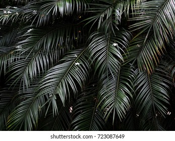 palm leaves detail close-up with hi-light shades and shadows shallow depth of field, soft focus under natural sun light with colorful bokeh background on a sunny day outdoor in tropical resort garden