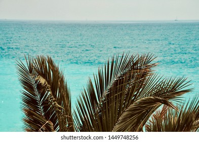 Palm leaves in front of the Cote d Azur sea at the coastal city of Nice in France, creative vintage style, space for own text