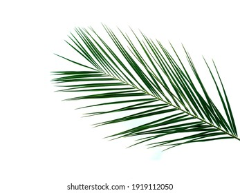 Palm leaves isolated on white background. Tropical palm leaves top view or flat lay. Copy space for text or design. Tropical palm leave, jungle leave floral pattern background
